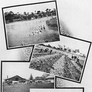 Collage of images from the Salvation Army training farm for youths, Riverview