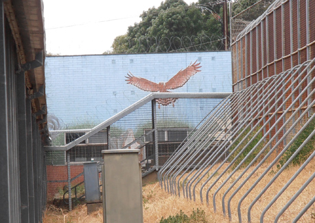 Mural at the Magill Training Centre thought to be painted in the 70s – recently demolished